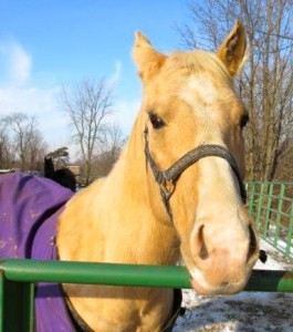 Diane's horse, Montana I have had him 4 years, he is 13 years old and had some emotional issues. I used HTA and color harmonics with animal communication on him. He is much better and a joy to ride.